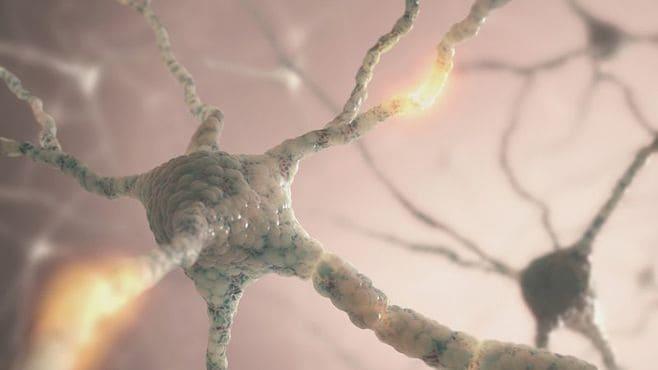 損傷を受けた脳は、いかに自己回復するのか