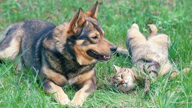 飼い猫も減少、僅差で飼い犬との逆転ならず
