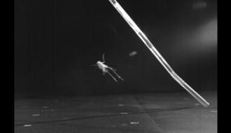コオロギの跳躍力はロボットに応用できる