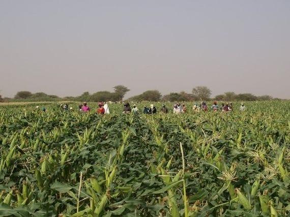 アフリカは、世界の食料庫になり...