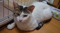 The Harsh Reality Facing Japan's Cats, New Kings of the Pet World