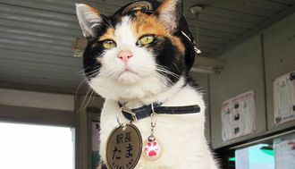 How Did Tama Become Such a Huge Star?