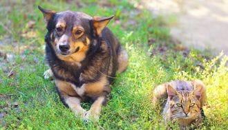 なぜ飼い犬が減り、飼い猫が増えているのか