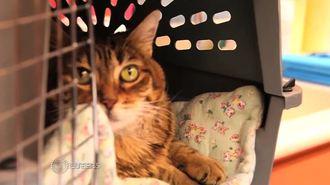 猫ビックリ!幹細胞治療で慢性口内炎が完治