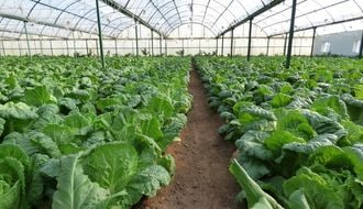 North Korean Farms Today: Focusing on Increased Food Output