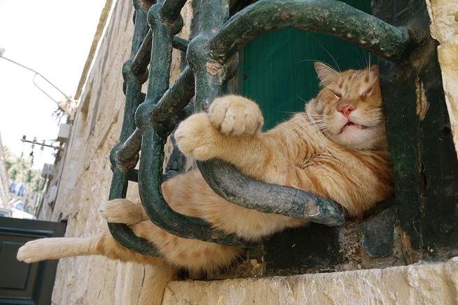 猫に本気で学びたい!「どこでも眠れる」技術