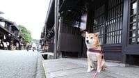 Pay a Visit to Japan's Cutest Hotel Mascot Dogs