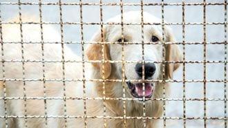 韓国ネット民が「犬食批判」に猛反発したワケ