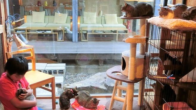 山口県の老舗旅館が保護猫活動を始めた理由