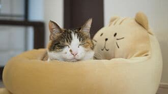 ライザップ、子会社再建に猫の手を借りる