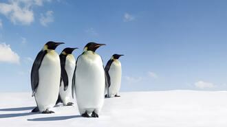 コウテイペンギンの父は「子の孵化」に命を捧ぐ