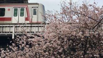 春満開!駅から駅へ「お花見ショートカット」