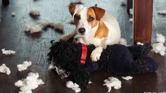 「イタズラする犬」のストレス耐性を育てる技術