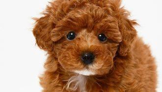 日本最強のペット犬は、「偶然の産物」だった