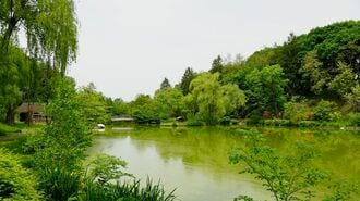 外来種を悪とする「池の水ぜんぶ抜く」の疑問点