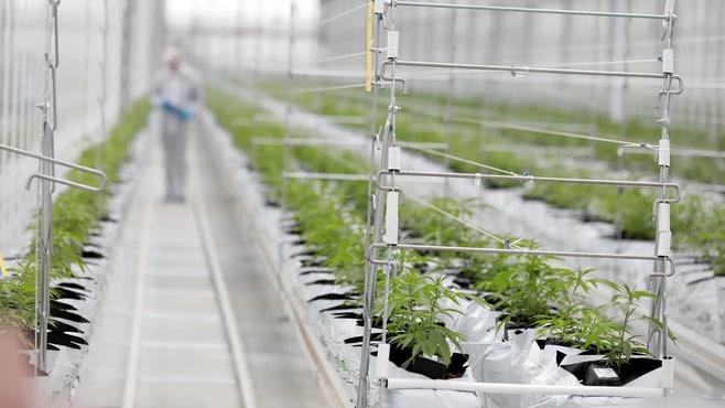 「大麻合法」の州がアメリカで続出している事情