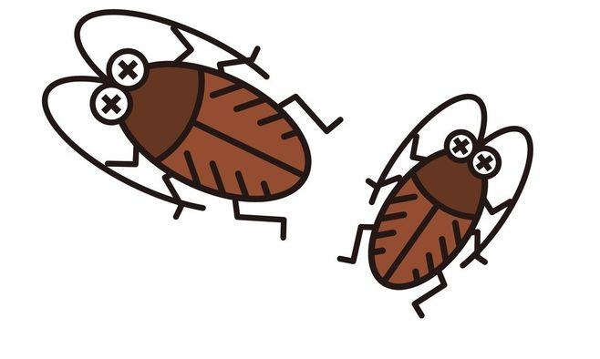 なぜゴキブリだけが、こんなに嫌われるのか