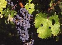 時代を超える普遍性に思いを馳せる 《ワイン片手に経営論》第1回