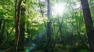 住民税に1000円上乗せ徴収「森林環境税」の違和感