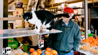 Public Cats of Tokyo: Kato Shoten, Takadanobaba