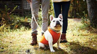 別居中の夫が「愛犬」連れ去ったらどうする?