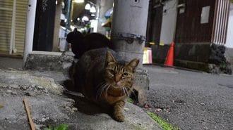 街角に住む猫には、過酷な運命が待っている