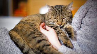 愛猫・愛犬の「安楽死」を考える際の必要知識
