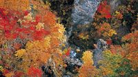 5 Must-See Spots for Fall Leaves in Tohoku