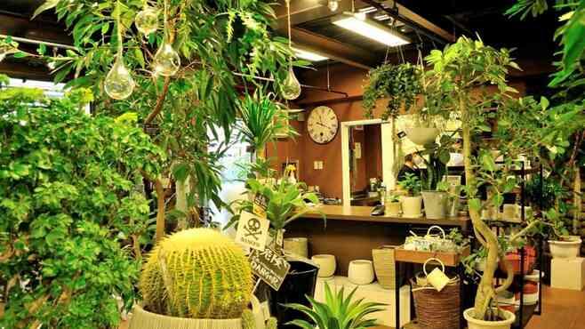 コロナで爆売れ中「観葉植物」を本気で選ぶコツ