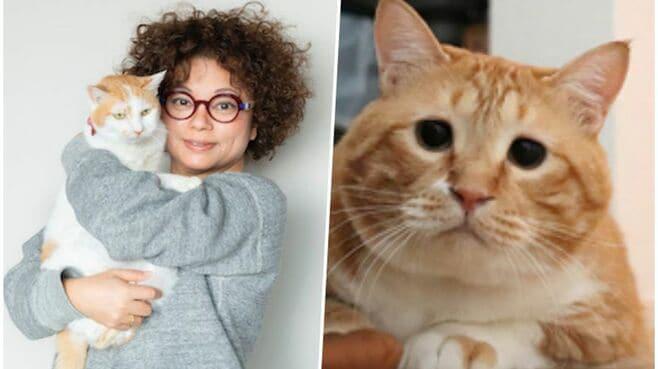 猫飼い人なら共感しかない「生活あるある」7つ