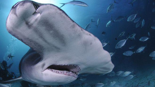 人間はサメとどのように共存していくべきか