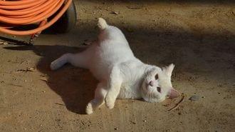 島猫3000匹の「不妊化」は、人間のエゴなのか