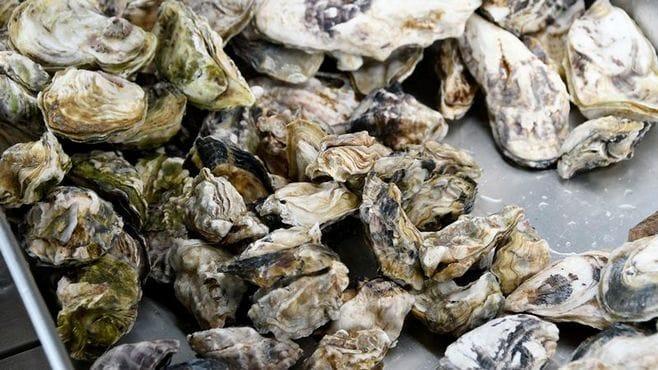 佐賀・有明海産の牡蠣が「世界一」と言える理由