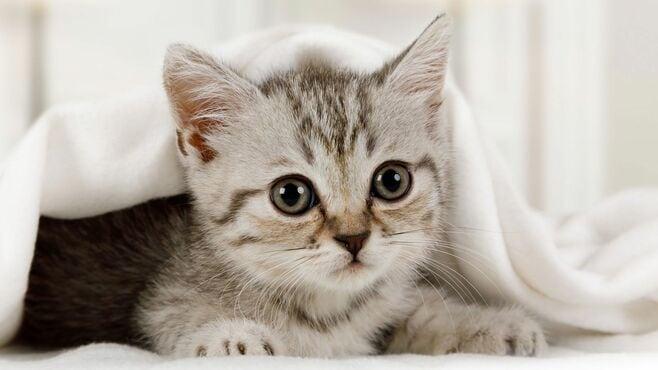 「猫を飼うと結婚できない」説は本当か徹底検証