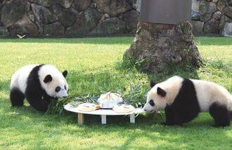 双子パンダ「5組」も育てた和歌山の施設の凄み