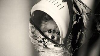 ガス室で命を絶たれる「元飼い犬」たちの叫び