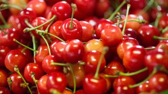 Shiny Red Summer Gems
