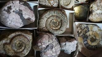 ひねくれの極みで繁栄した「日本の化石」の正体