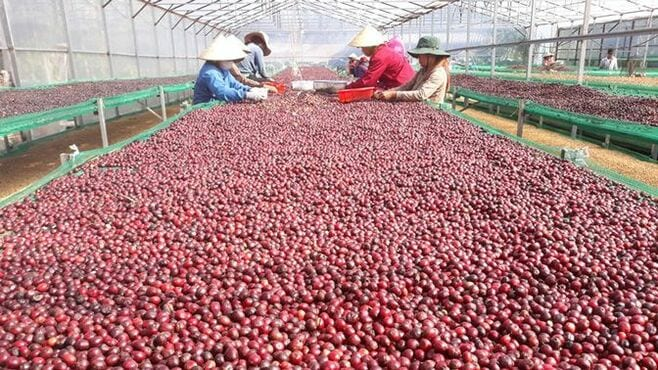 ベトナム産コーヒーをブランドに変える仕掛人