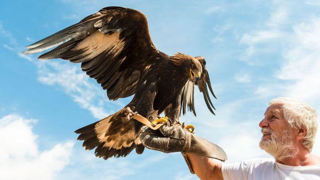 「鷹狩り」が「王者の狩り」と呼ばれる理由