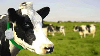 「牛用ウェアラブル」で畜産はここまで変わる