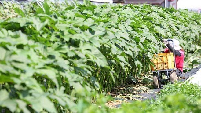 """茨城県土浦市の""""理想農園""""は何が違うのか"""